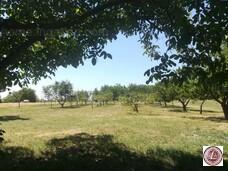 Eladó kert, gyümölcsös, Balatonkeresztúr - 3. kép
