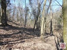 Eladó erdő, Monoszló - 3. kép