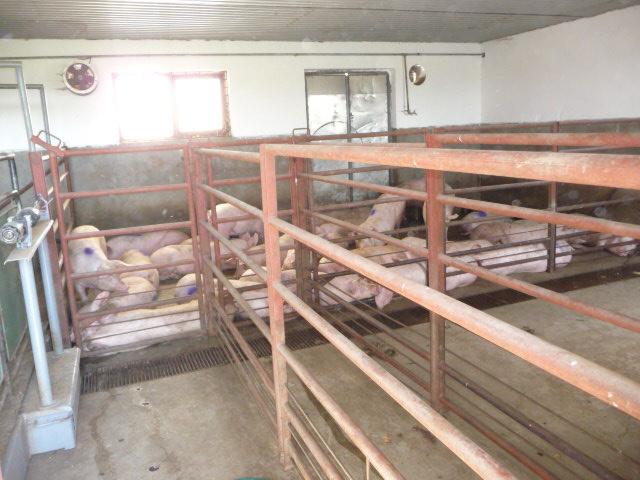 Kecskemét, Bács-Kiskun megye
