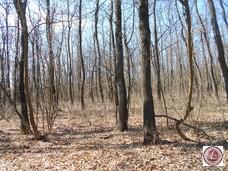 Eladó erdő, Monoszló - 2. kép