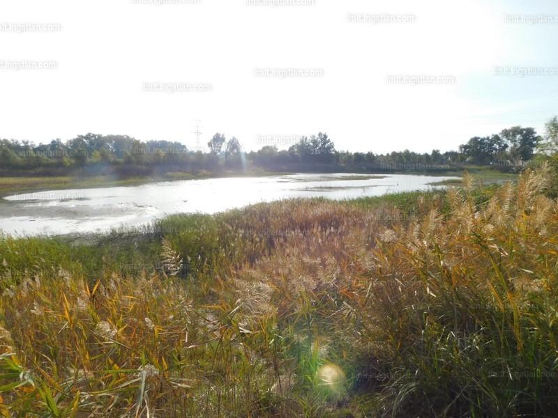 Algyő, Csongrád-Csanád megye